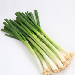 Spring Onions x6 ***DELISTED***